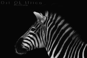 .Out of Africa. by WhiteSpiritWolf