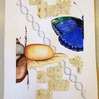 Beetle, Butterfly and Evolution by georgie-axolotls
