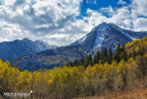 Line of Aspen Colors by mjohanson
