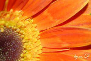orange flower by amna-alq