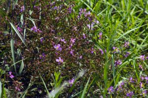 Even weeds can be pretty by drewii57