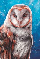 Barn Owl by Kaos-Nest