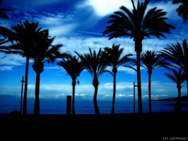 Palm Treesss by caithness155
