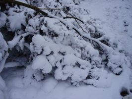 snow bush by KoyukiShiro