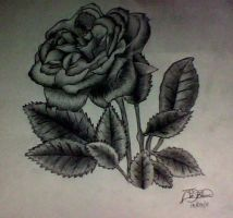 Drawing of a Rose by JedHurricane