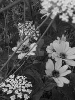 Flower black and white by musickrazy16