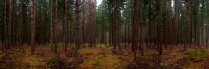 Finnish Forest by AneurysmGuy