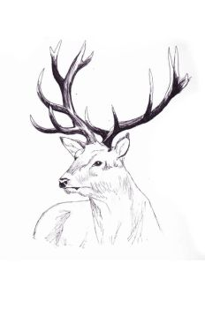 Stag by ColouredClouds