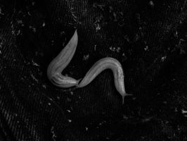 Never Know When You'll Need Slugs by SprenklePhotography