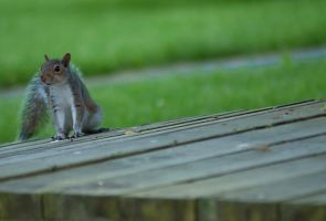 Squirrelfriend Baby 01 by Suinaliath