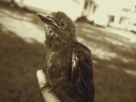 Baby Bird by ChicaDelMar