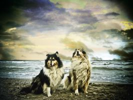 all dogs by hermio