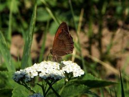 A butterfly by Piok