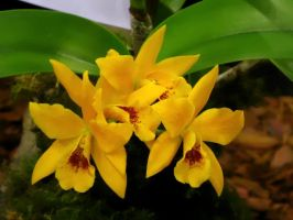 Orchid Series 7 by Formel