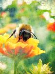bee by rockmylife