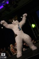 Darkie the Cat - Fursuit by DarkieKun by Koiice