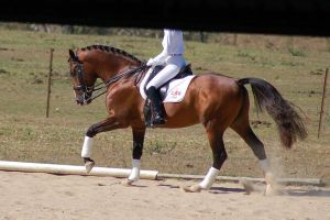 Horse stock - dressage 2 by Chunga-Stock