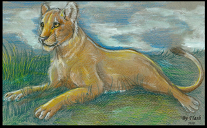 Lioness by FlashW