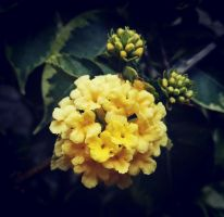 Beautiful yellow by loveautumnandnature