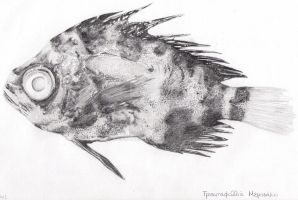 Schedophilus Maculatus sketch by Sci-rose