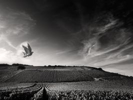 flying low by VaggelisFragiadakis