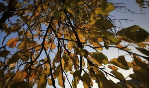 autumn colors by psychodelic-candy