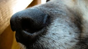 Dog nose by TortueBulle