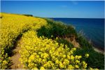 The rapefield near the cliff by jchanders