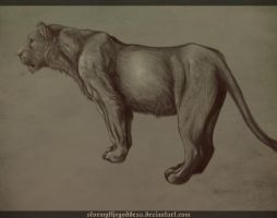 Lioness 2 by Rudranee