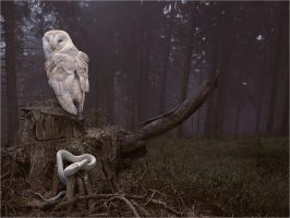 TALES FROM EASTERN WOODS-OWL AND WHITE SERPENT by SHUME-1