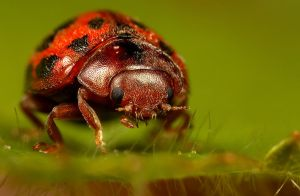 LadyBird 5 by Alliec