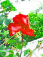 Red Rose by DualC91
