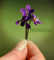 Purple little flowers by NaViGa7or