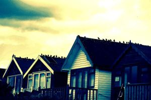 birds of a feather... by awjay