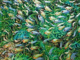 Fish - Detail 4 by Hoon-King