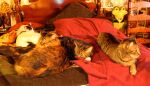 Queen Size Cat Bed by edwardvb