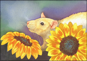 Sunflower Rat by JNFerrigno
