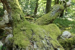 Mossy log Stock 15 by Malleni-Stock