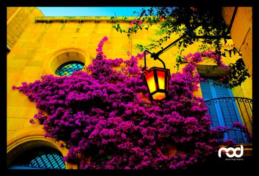 Flowers at Mdina by MaNkIbOwN
