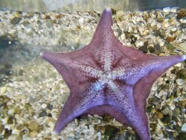 Aquarium - Another star by Flo996