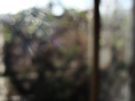 And the sun emits the bokeh... by Sajextryus