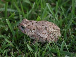Toad 1 by texasghost