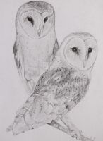 Barn owls by MetalMouseArt