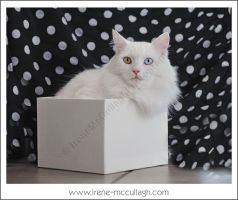 Ziggy Squared by substar