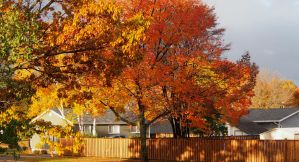 My Steet IN The Fall by CiacoAgain