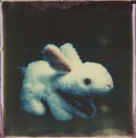 A Harmless Little Bunny by JillAuville