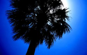 Palm Silhouette by Statham75