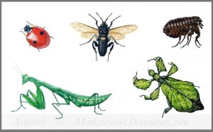 Insects by markstewart