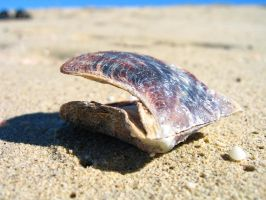 gasping shell by naz1