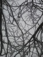 Frozen Branches by dantheman007a